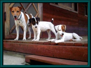 Pratsals Puppies and Litters cute puppies for sale