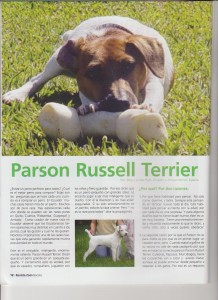 Español patterdale terrier
