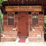 Russell Terrier Parson Russell Terrier Cachorros Ecuador Pratsals Kennels Criadero Pratsals