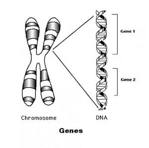 30,000 genes in dogs