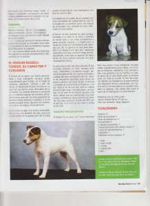 Español staffordshire bull terrier