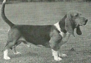 It can be seen comparing old and new photos of the same breed