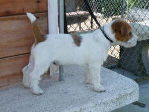 Stubby Streeker Pup
