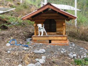 Russell Terrier Parson Russell Terrier Pratsals Kennels Criadero Pratsals